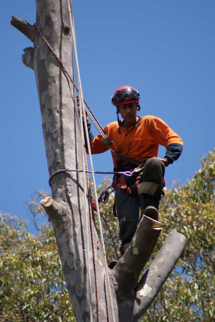 AQF Level 5 Arborist Sydney