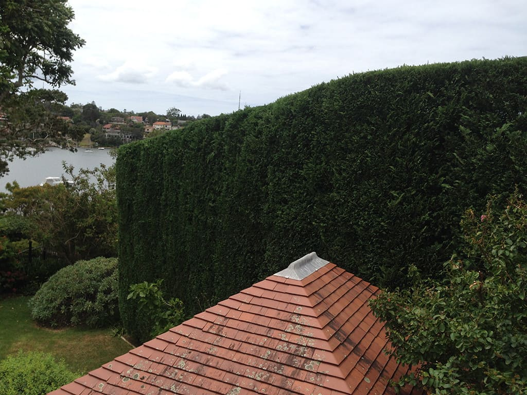 Canopy Tree Services Hedge Trimming Sydney