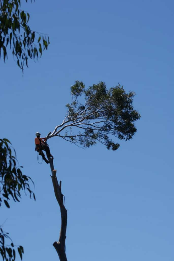 Tree Removal Bundanoon