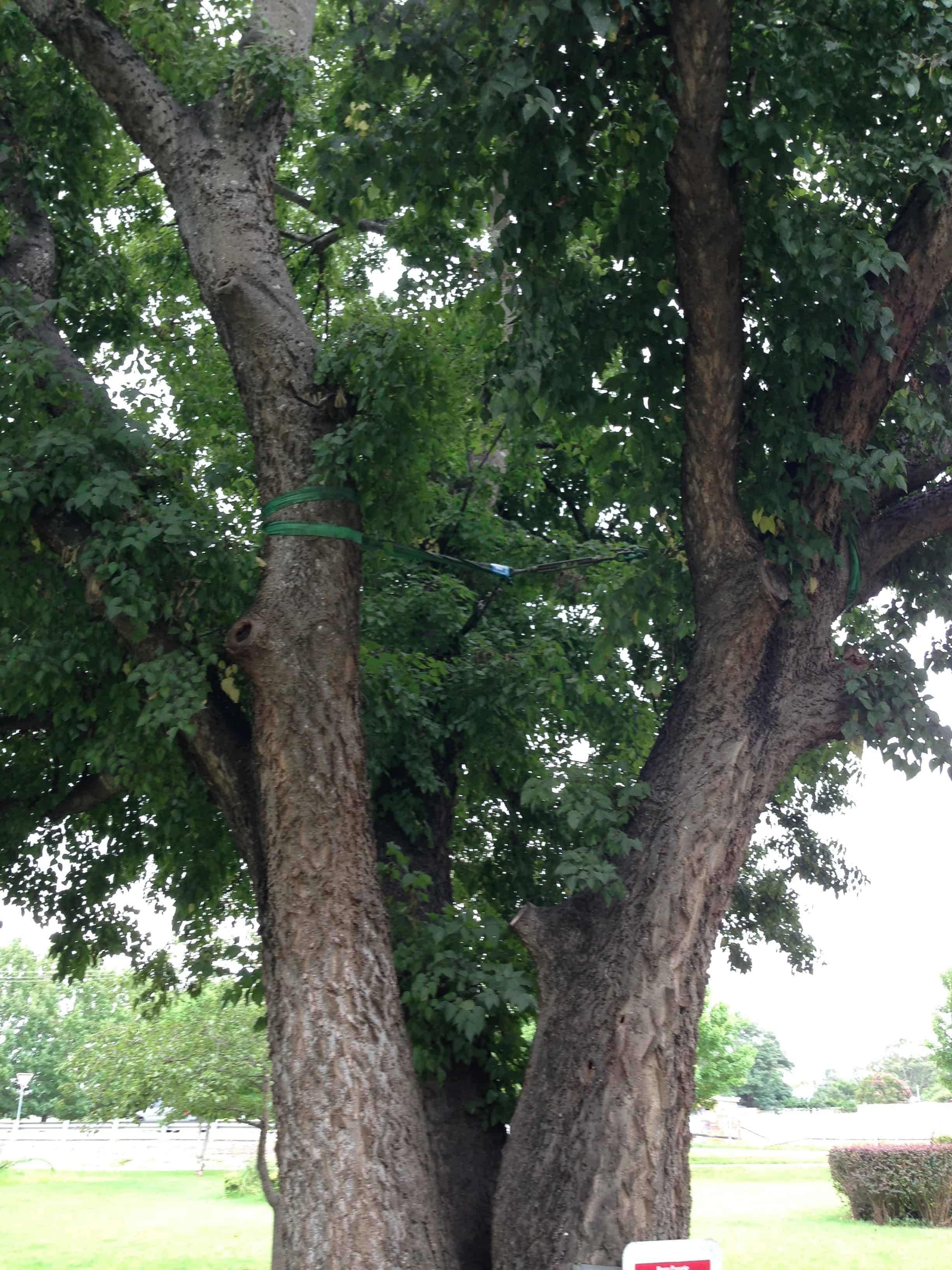 Canopy Tree - Tree Bracing Services & Other Tree Services | Canopy Tree | Arborists Sydney