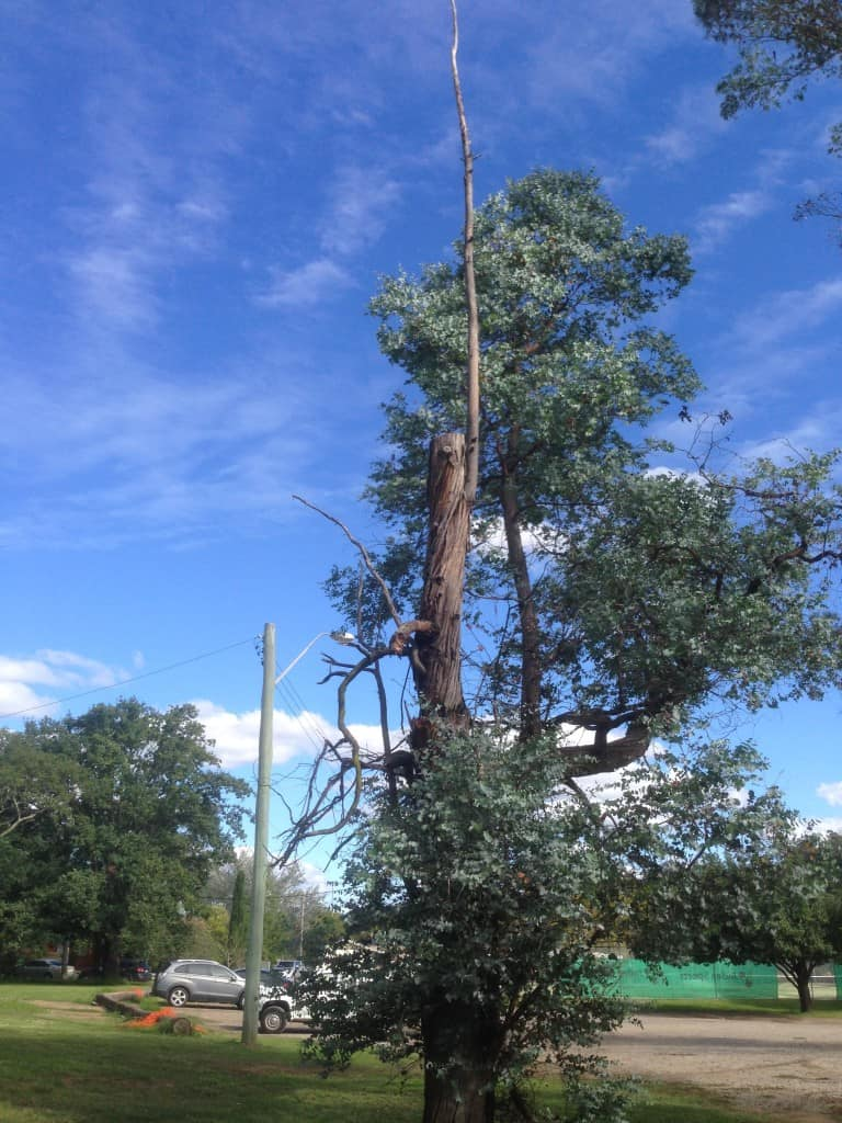 Canopy Tree Services Tree Hazard & Risk Assessment