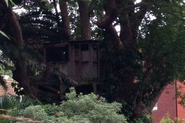 Canopy Tree - Tree House Design & Construction