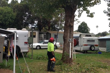 Canopy Tree - Tree Pruning Services Sydney and Southern Highlands