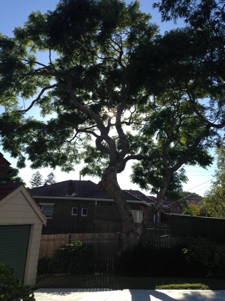 Canopy Tree Services Tree Maintenance Programs