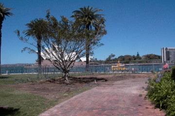 Canopy Tree - Tree Planting Programs
