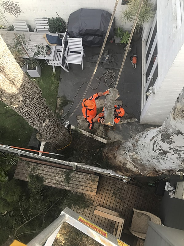 Canopy Tree Removal Sydney & the Southern Highlands