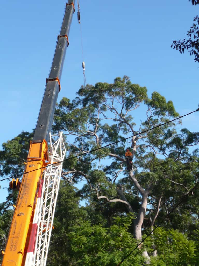 Canopy Tree Removal Narellan