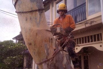Tree Removals Sydney
