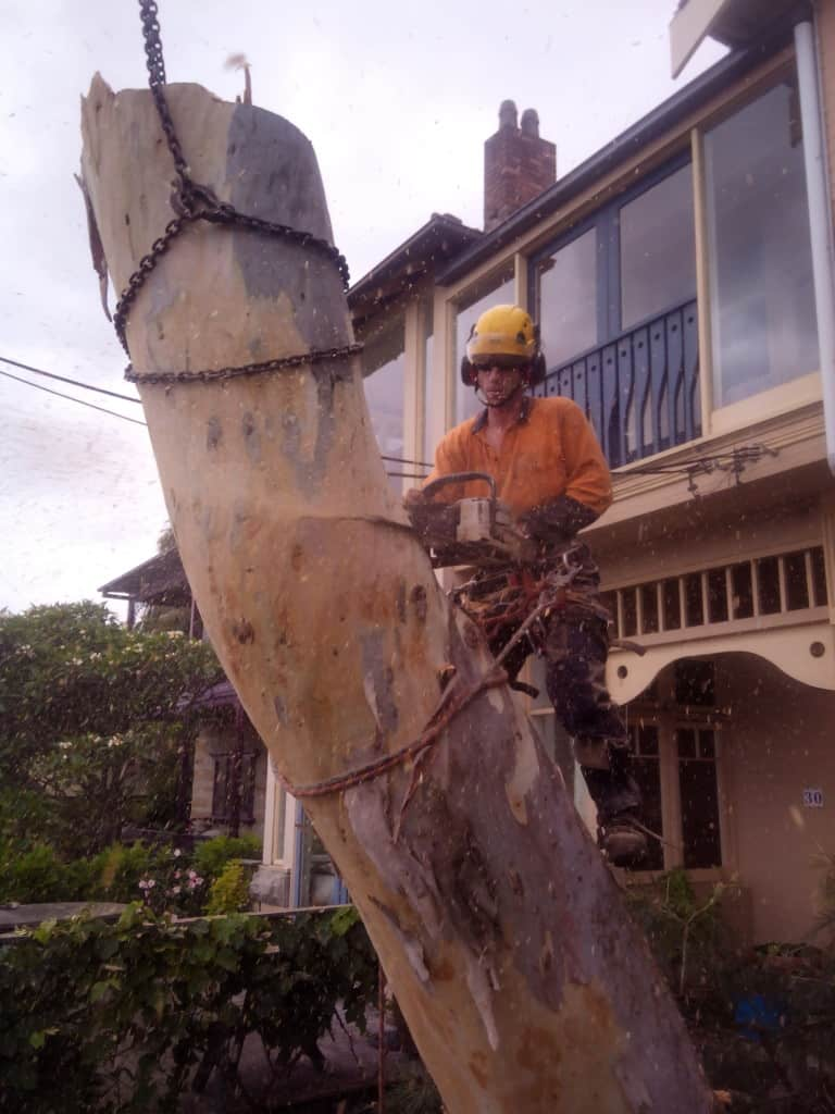 Canopy Tree Removal Bowral