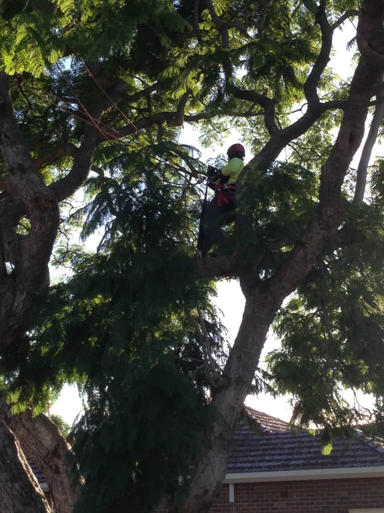 Canopy Tree Services offer Tree Inspections