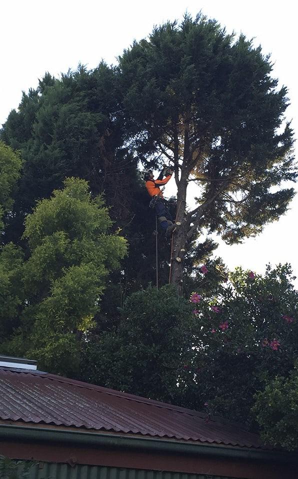 Tree Removal Camden