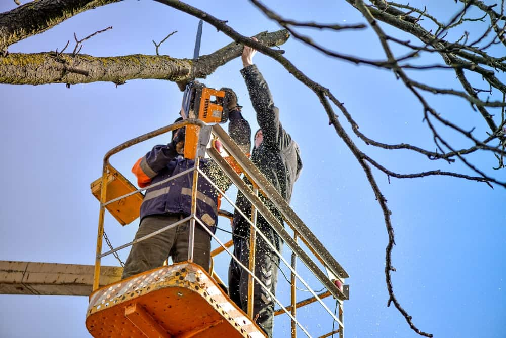 Canopy Tree Pruning Bundanoon Services