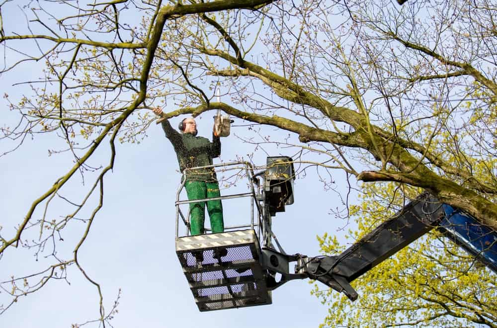 Canopy Tree Pruning Exeter