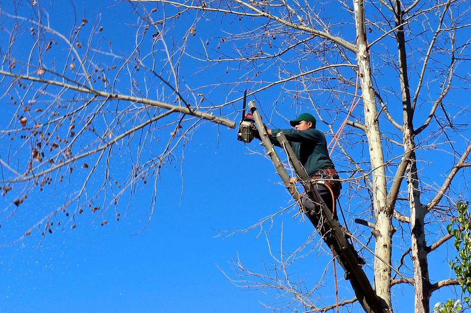 Canopy Tree Pruning Souther Highlands Services
