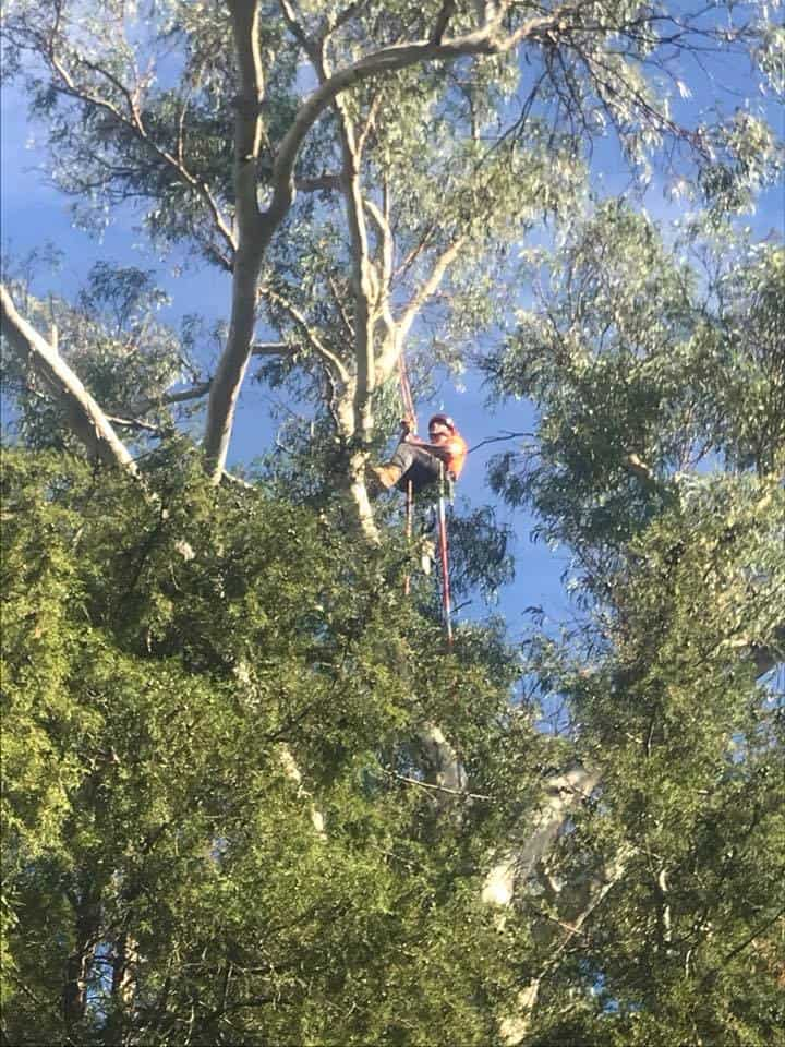 Tree Services Strathfield | Canopy Tree Removal & Arborists Strathfield
