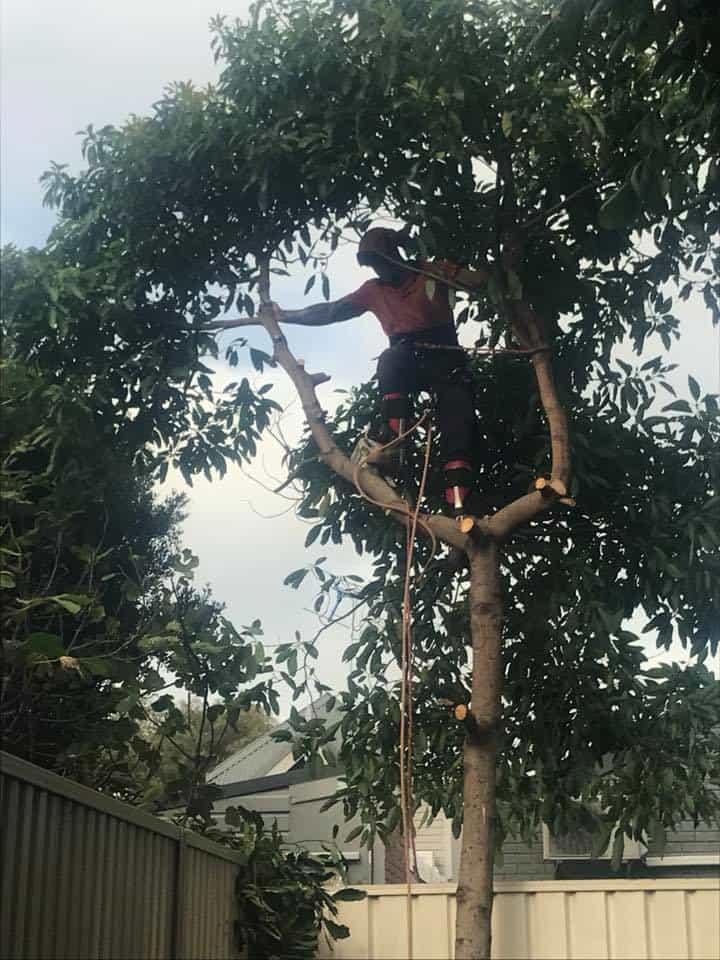 Tree Services Balmain | Canopy Tree Removal & Arborists Balmain
