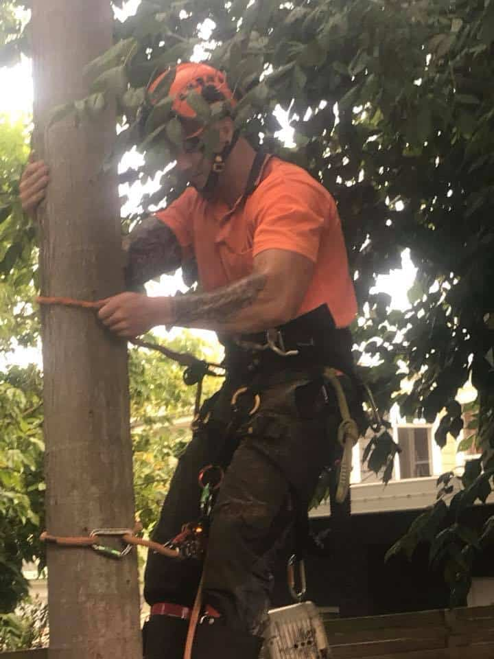 Tree Services Bankstown | Canopy Tree Removal & Arborists Bankstown