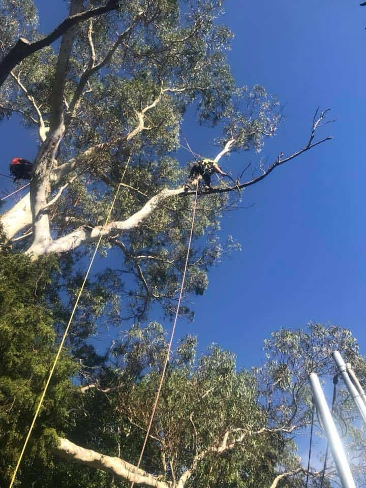 Tree Services Willoughby | Canopy Tree Removal & Arborists Willoughby