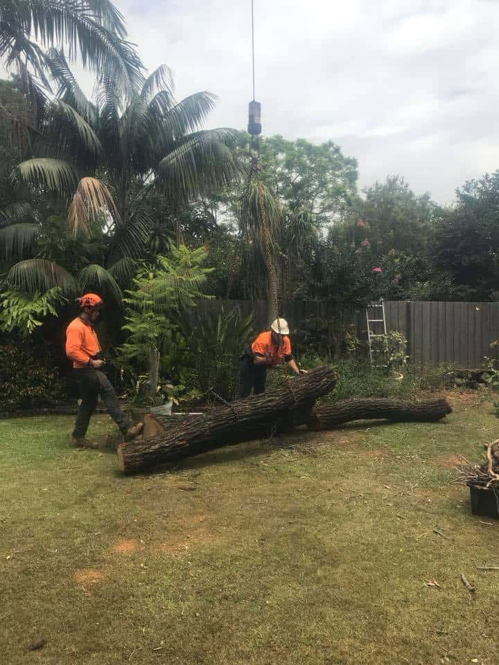 Canopy Tree Services Blacktown Sydney