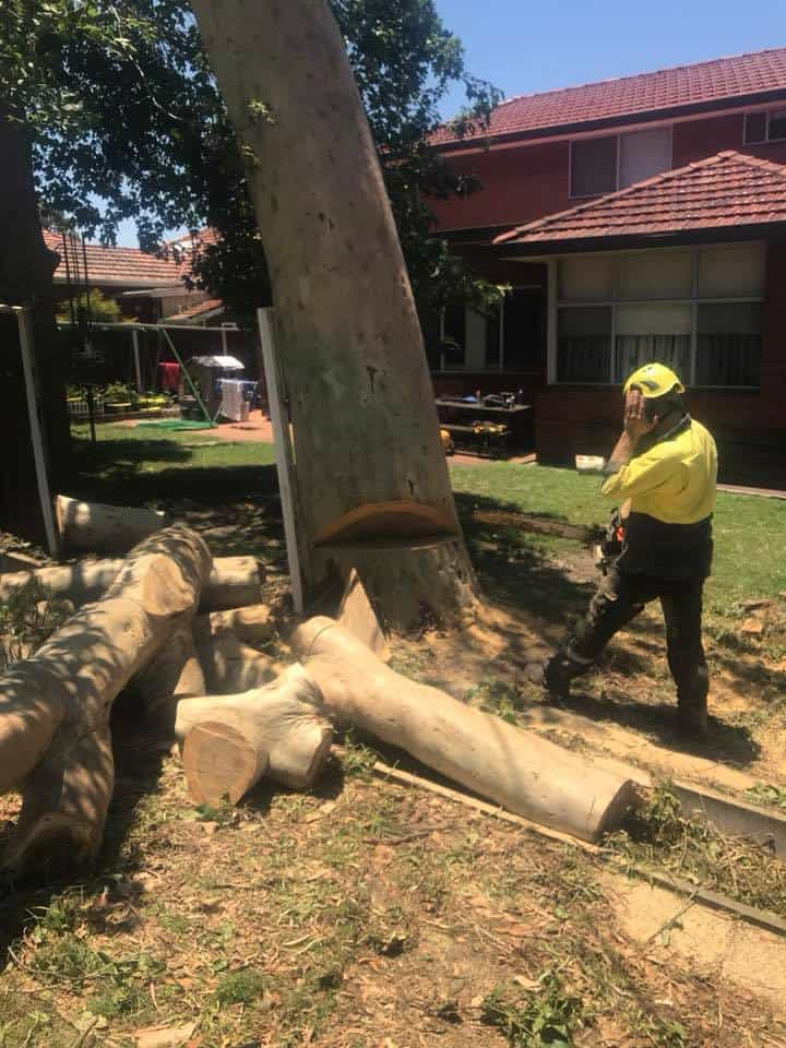 Canopy Tree Services Epping