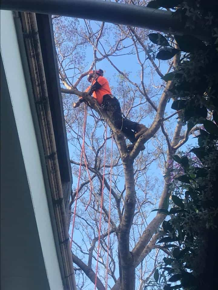 Canopy Tree Services Hurstville