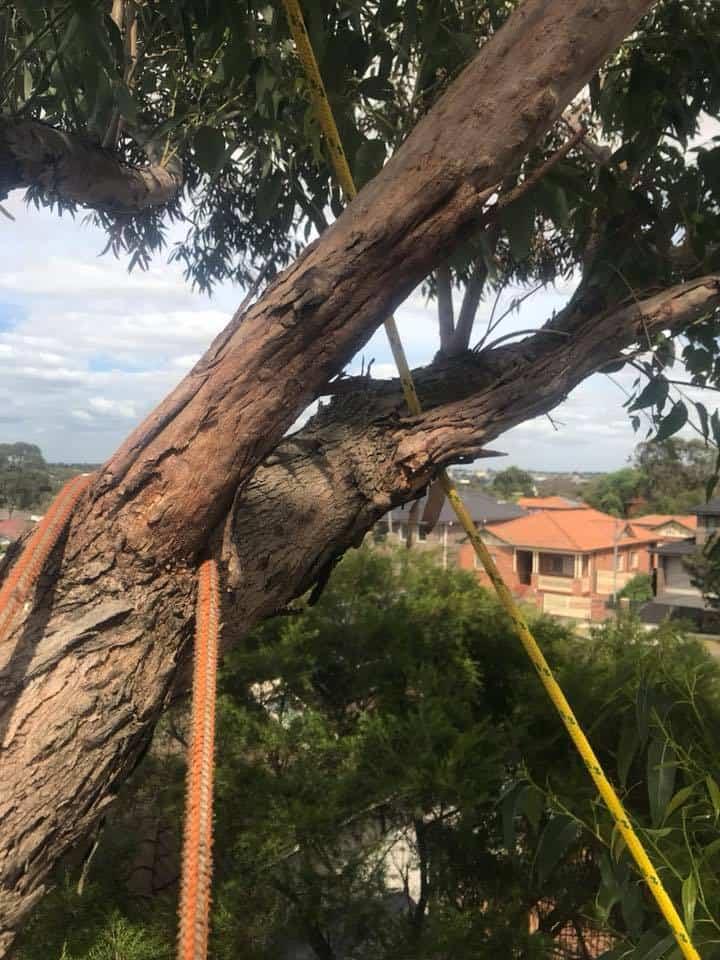 Canopy Tree Services Parramatta