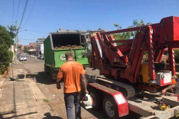 ingleburn tree removal