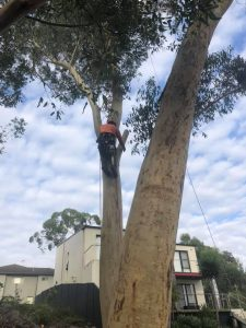 tree removal fitzroy falls
