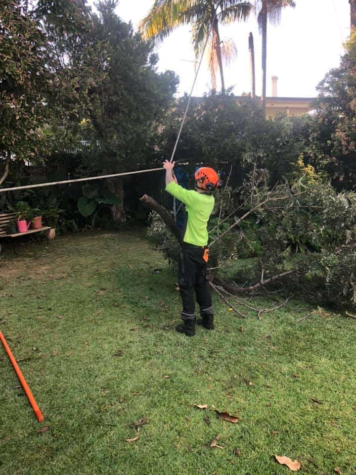 tree removal helensburgh