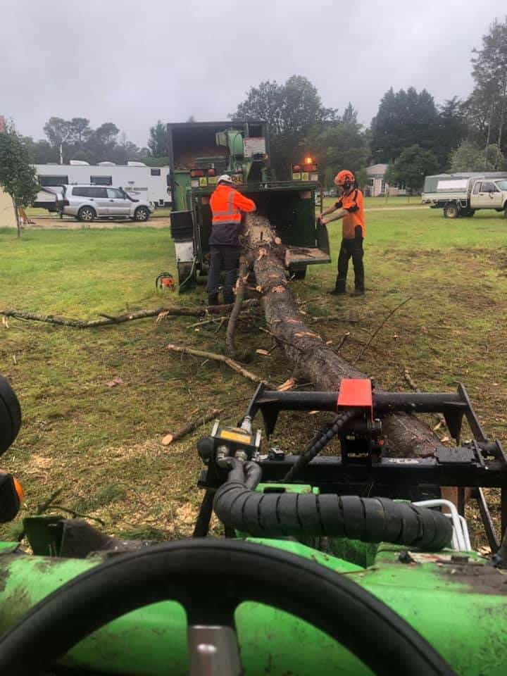 tree services helensburgh