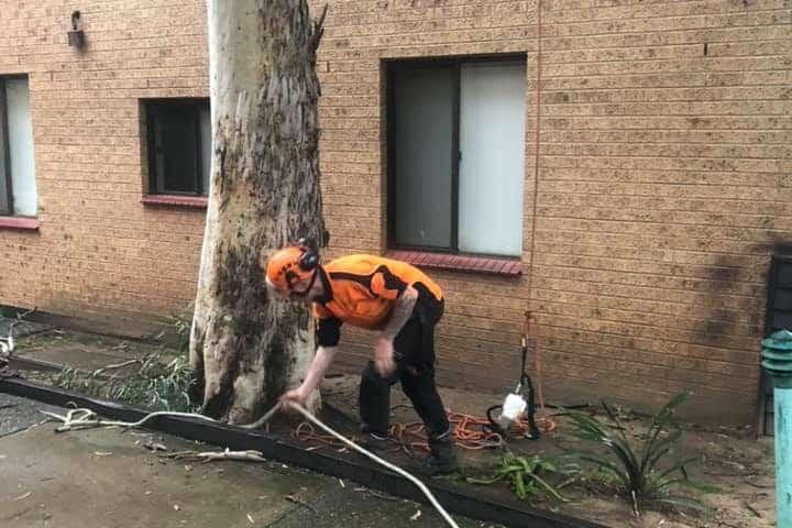 bulli tree services