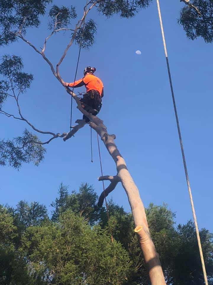 Tree Removal Services Austinmer