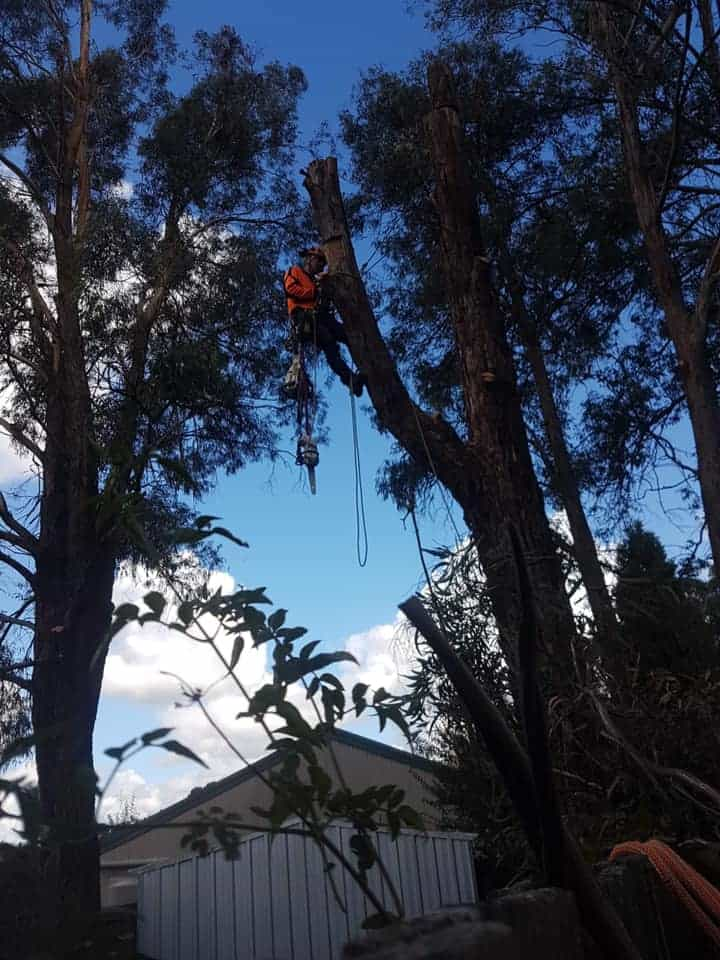 tree services stanwell park