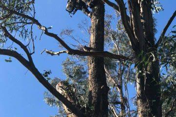 tree removal arborist shellharobur