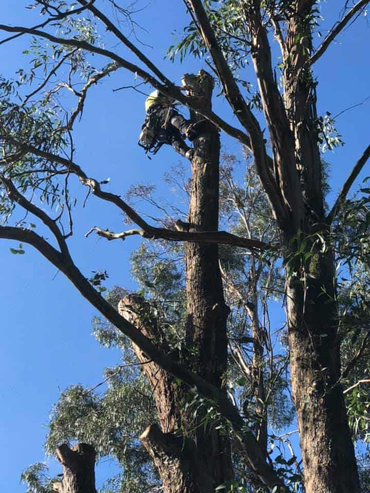 tree removal arborist shellharobur