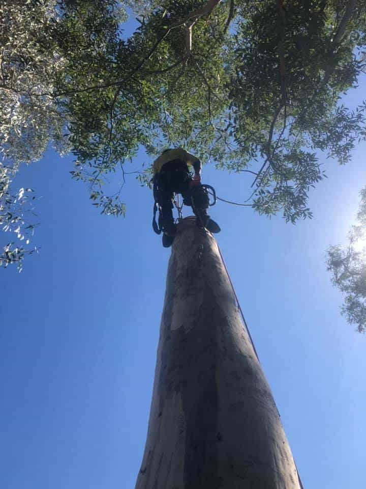 tree removal stanwell tops nsw