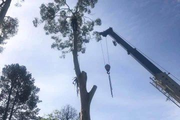 tree services kiama
