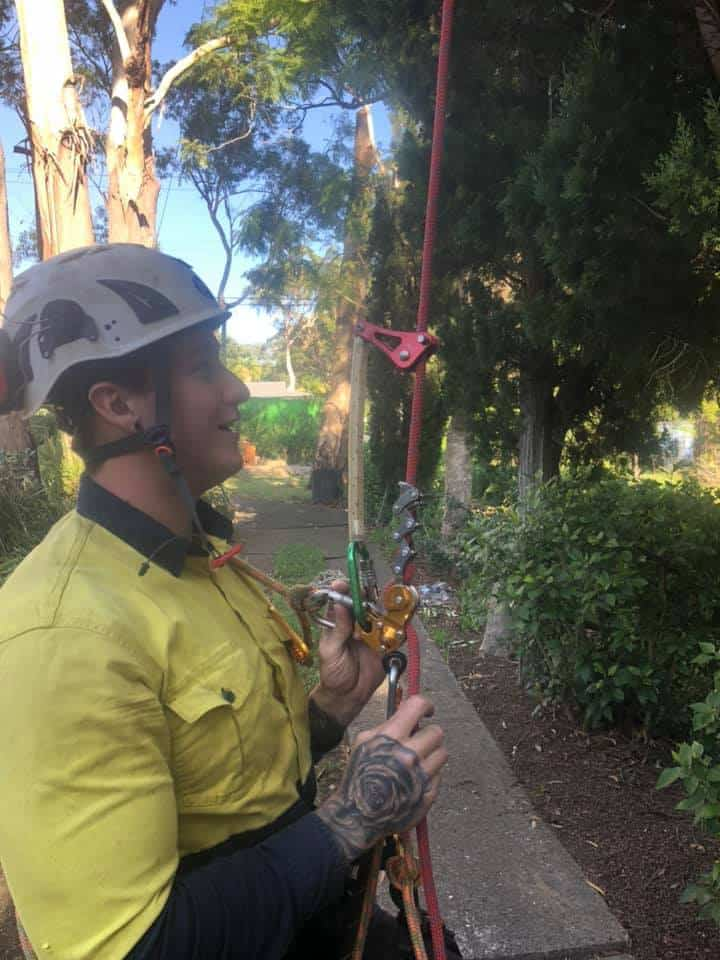 tree removal services st clair