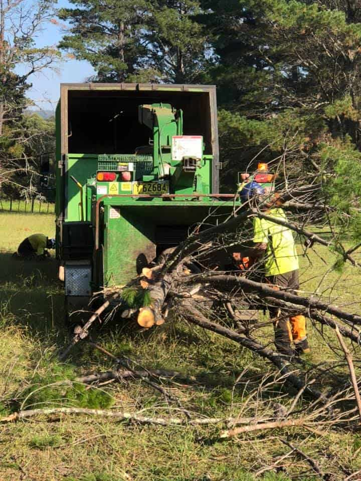 tree removal wollondilly