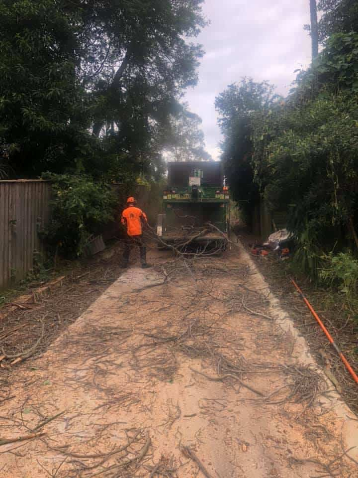 tree services wattle grove