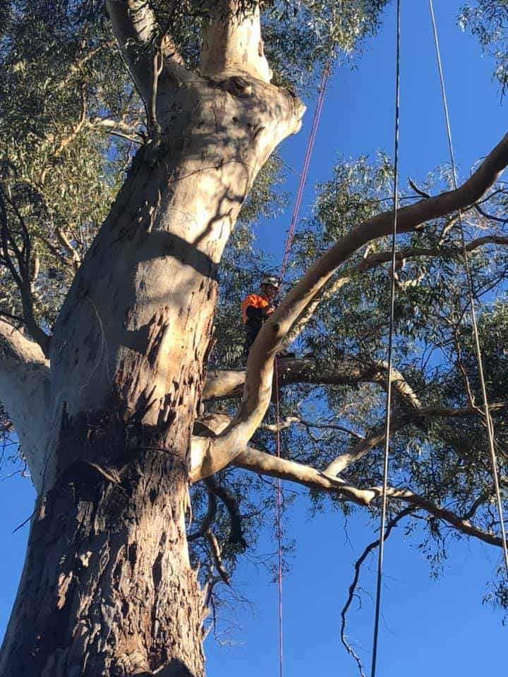 tree services wollongong