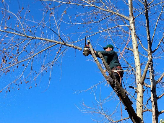 Tree Removal Southern Highlands 1