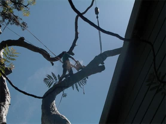 Tree Removal Southern Highlands