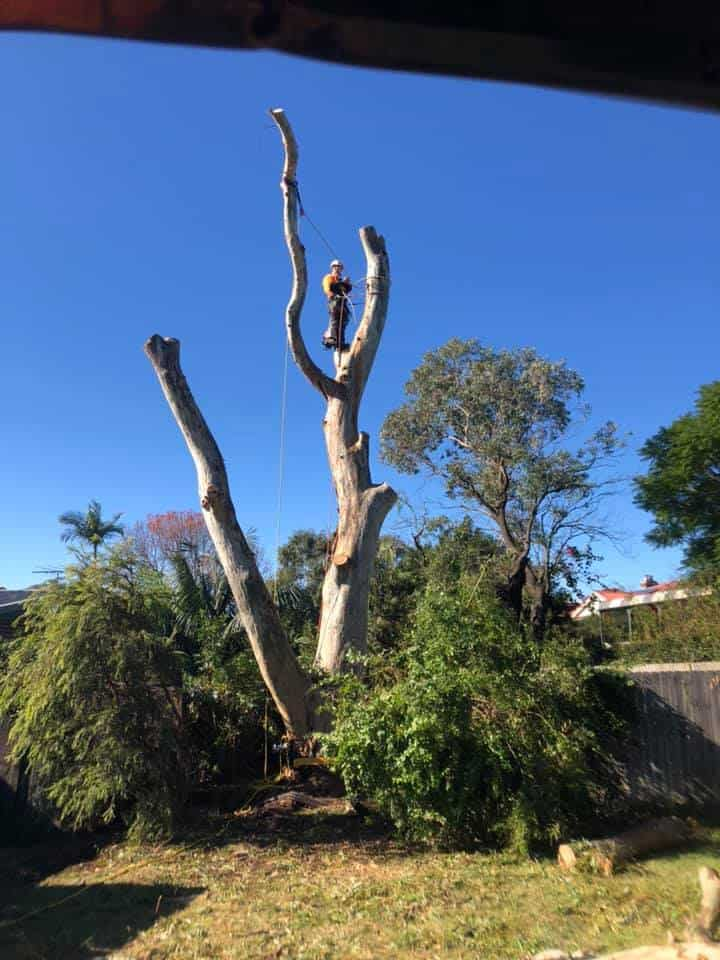 things you need to know before removing tree on your property in nsw