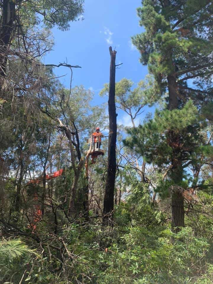 tree removal in avoca southern highlands