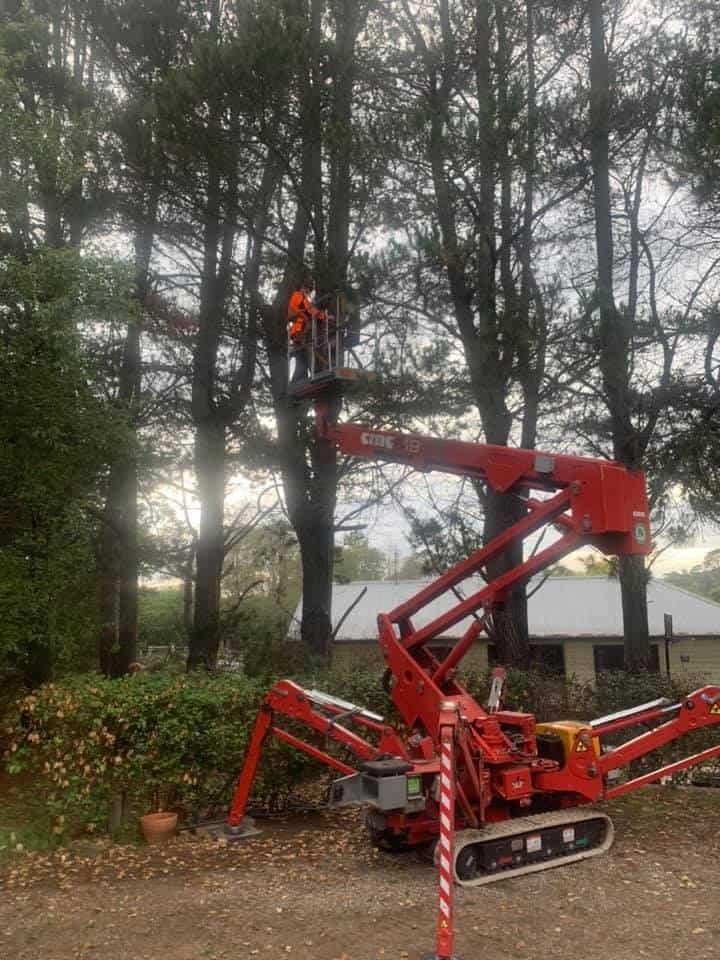 tree removal avon