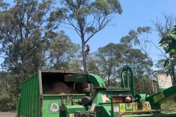 tree removal balmoral