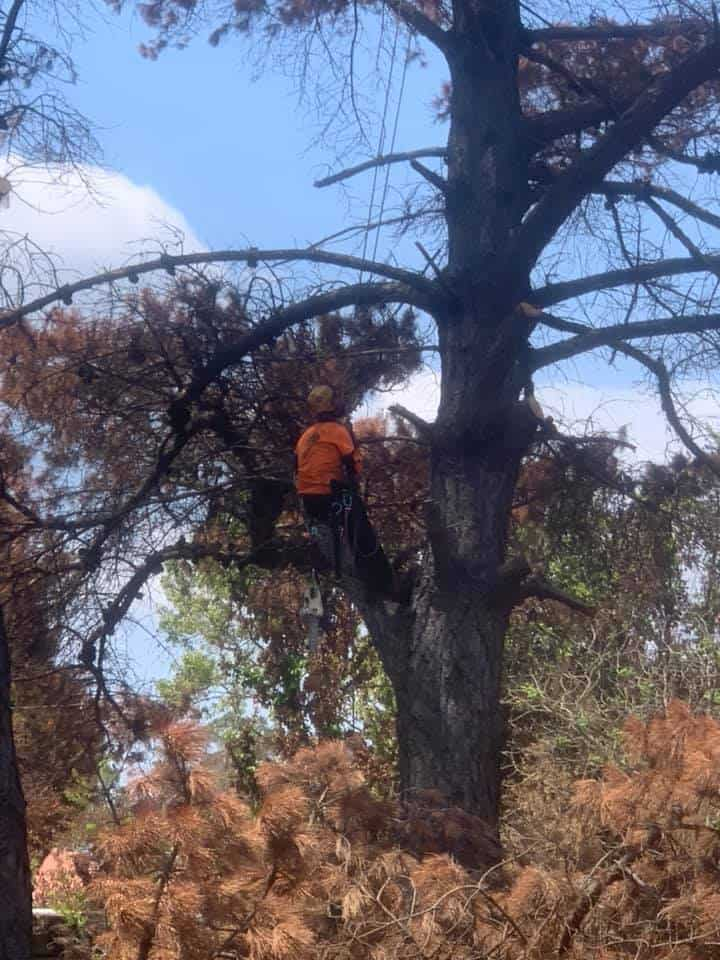 tree removal barrengarry
