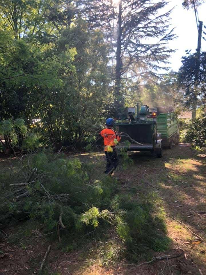 tree removal belango