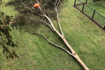 tree removal berrima